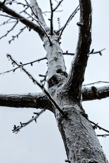 Frozen Limbs