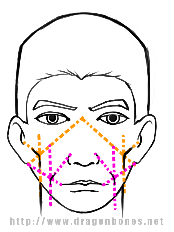 Drawing the Human Face Tutorial 3 - Step 2